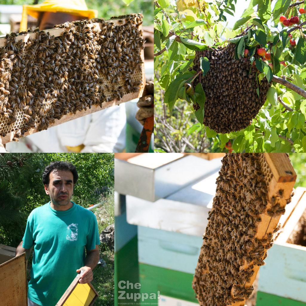 Conoscere le api con Pasqualino - Genuini Cilento